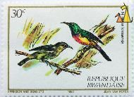 Regal Sunbird, Republique Rwandaise, Rwanda, stamp, bird, 30 c, Harrison and Sons Ltd, 1982, Jean Van Noten, Nectarinia regia, Nectarinia regia kivuensis