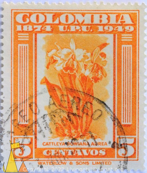 Reina del Choco, Columbia, stamp, plant, flower, orchid, Cattleya dowiana aurea, Cattleya dowiana var. aurea, 1874, 1949, UPU, 5, Centavos, Waterlow and sons limited