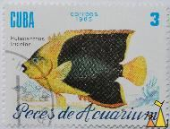 Rock Beauty Angelfish, Cuba, correos, 1985, 3, Peces de Acuarium, Holacanthus tricolor