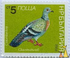 Rock Pigeon, Bulgaria, stamp, bird, pigeon, 5 Ct, nowa, 1984, Columba livia