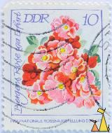 Rose bouqet, DDR, Germany, stamp, plant, flower, rose, Bergers rose iga Erfurt, 10, Internationale Rosenausstellung DDR 1972