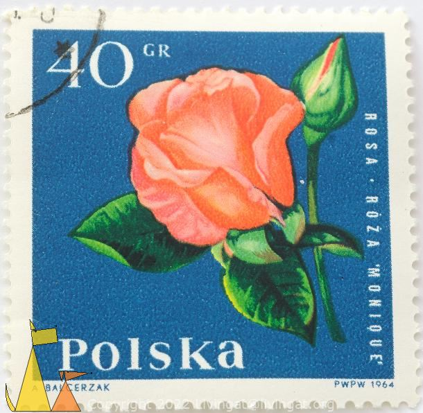 Rose monique, Polska, Poland, stamp, plant, flower, rose, Roza monique, Rosa spp, 40 Gr, PWPW, 1964, A Balcerzak