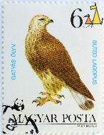 Rough-legged Buzzard, Magyar, Hungary, stamp, bird, bird of pray, 1983, Posta, Szücs Erzsébet, WWF, Panda, Buteo lagopus, 6 Ft, Gatyas ölyv