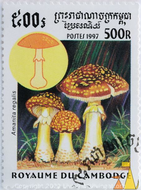 Royal Fly Agaric, Royaume du Cambodge, Cambodia, stamp, mushrom, postes, 1997, 500 R, Amanita regalis