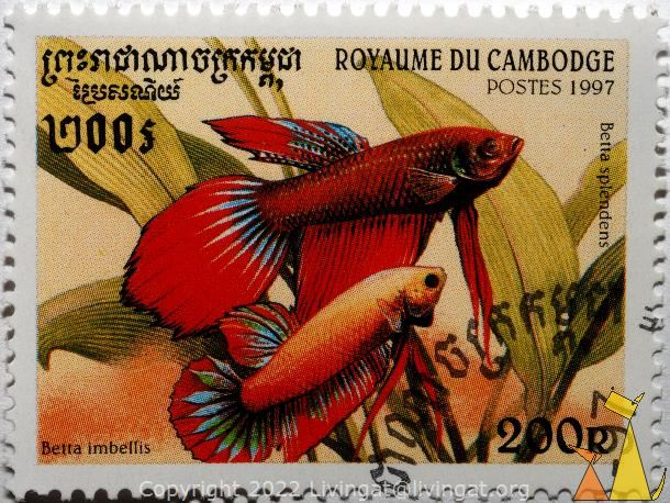 http://stamps.livingat.org/images/Royaume_du_Cambodge_Cambodia.stamp_fish_Postes_1997_200_R_Betta_splendens_Betta_imbellis.610.0xb15ffc51c24d9e9.DSC_5105.jpg.aspx