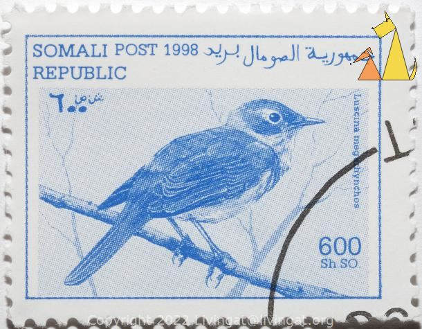 Rufous or Common Nightingale, Republic Somali, Somalia, stamp, Post, 1998, 600 Sh SO, Luscina megarhynchos