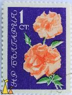 Salmon Roses, Bulgaria, stamp, plant, flower, Rosa spp, 1 Ct