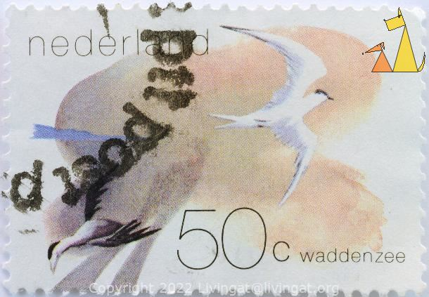 Sandwich Tern, Nederland, Netherlands, stamp, bird, flying, 50 c, Waddenzee, location, flying, Thalasseus sandvicensis, Sterna sandvicensis