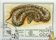 Saw-scaled viper, CCCP, Russia, stamp, reptile, snake, Echis carinatus, Saw-scaled viper, 6 K, 1977
