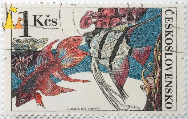 Scalar and Fighting fish, Ceskoslovensko, Czechoslovakia, stamp, fish, 1 Kcs, J Liesler, 1975, J Hercik, Betta splendens, Pterophyllum scalare