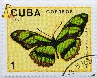 Scarce Bamboo Page, Cuba, stamp, insect, butterfly, Correos, 1989, 1, Metamorpha dido, Philaethria dido