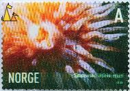 Sea Anemone, Norge, Norway, stamp, A, 2005, Sjöanemone, Urticina eques, close-up, anemone
