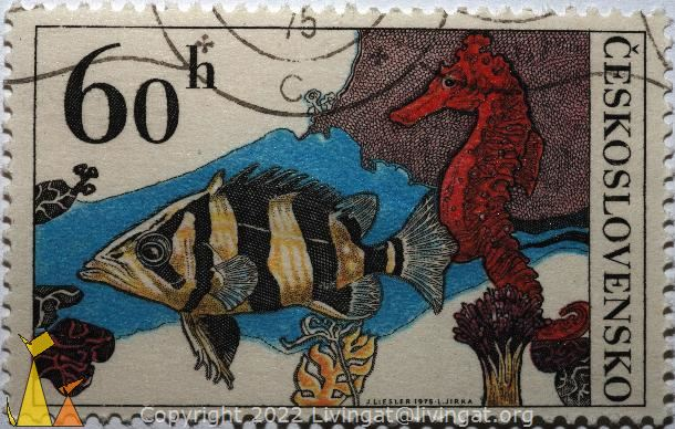 Seahorse and fish, Ceskoslovensko, Czechoslovakia, stamp, fish, 60 h, J Liesler, 1975, L Jirka, red seahorse