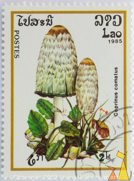 Shaggy ink cap, Lao, Laos, stamp, mushrom, 1985, postes, 2 k, Coprinus comatus