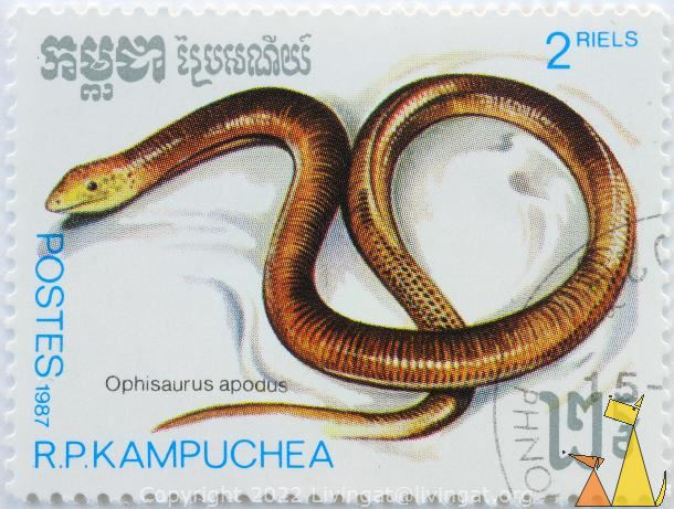 Sheltopusik, R.P. Kampuchea, Cambodia, stamp, reptile, lizard, Ophisaurus apodus, Pseudopus apodus, Sheltopusik, Postes, 1987, 2 Riels