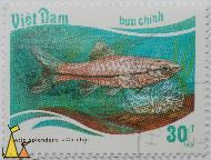 Siamese fighting fish, Viêt Nam, Vietnam, stamp, fish, buu chinh, 30 dt, 1987, Cá choi, Betta splendens