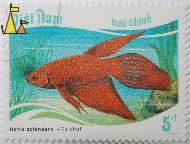 Siamese fighting fish, Viêt Nam, Vietnam, stamp, fish, buu chinh, 5 dt, 1987, Cá choi, Betta splendens