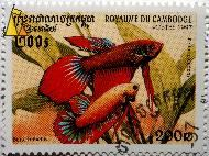 Siamese fighting fish, Royaume du Cambodge, Cambodia, stamp, fish, Postes, 1997, 200 R, Betta splendens, Betta imbellis