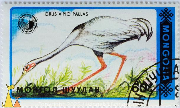 Siberian Crane on Food Hunt, Mongolia, stamp, bird, Grus vipio pallas, flying, 1990, 60, Grus leucogeranus