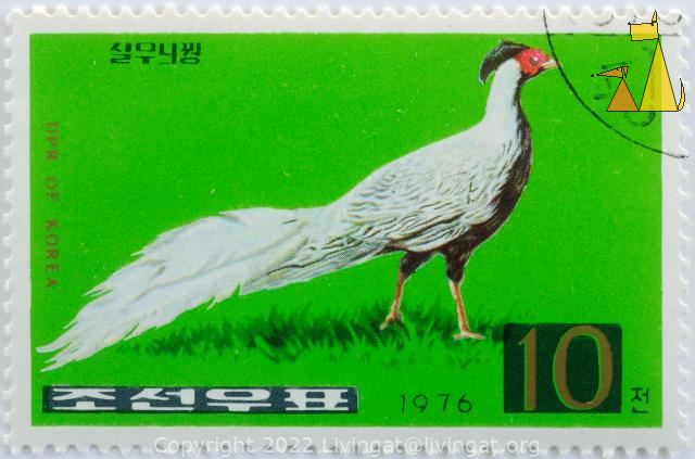 Silver Pheasant, DPR of Korea, North Korea, stamp, bird, 1976, 10, Lophura nycthemera