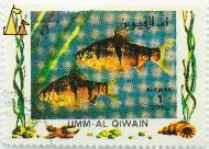 Six-banded tiger barb pair, Umm al Qiwain, UAE, stamp, fish, Air Mail, 1 Riyal, Puntius hexazona