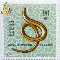 Slow worm, Polska, Poland, stamp, reptile, lizard, Anguis fragilis, Slow worm, 90gr, padalec, Desselberger, PWPW