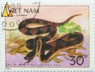 Snorkel viper, Viet Nam, Vietnam, stamp, reptile, snake, Ancistrodon acutus, Deinagkistrodon acutus, Snorkel viper, Sharp-nosed viper, Buu Chinh, 1988, 30D, Ran Luc Hech, Gunther