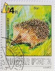 Southern White-breasted Hedgehog, Magyar, Hungary, stamp, mammal, Posta, Kincses A, 1986, 4 Ft, Sun, Erinaceus concolor