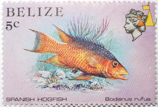 Spanish hogfish, Belize, stamp, fish, 5 c, Spanish hogfish, Bodianus rufus