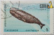 Sperm Whale, Cuba, stamp, fish, mammal, 5, 1984, Cetáceos, cachalote, Physeter catodon