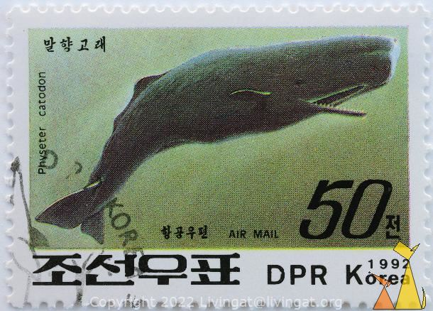 Sperm Whale, DPR Korea, North Korea, stamp, mammal, whale, 1992, 50, Air Mail, Physeter catodon