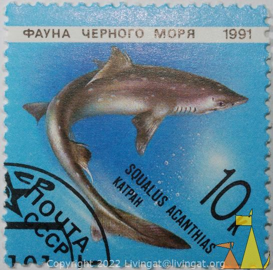 Spiny dogfish, CCCP, Soviet, Russia, stamp, shark, Squalus acanthias, Payha, Mopr, 1991, Katpah, 10 k