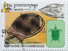 Spiny softshell turtle, Royaume de Cambodge, Cambodia, stamp, reptile, turtle, Postes, 1998, 900 R, Trionyx spiniferus, Apalone spinifera