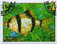 Spotted Barb, Sharjah and Dependencies, Sharjah, stamp, fish, air mail, 1 Dh, Puntius anchisporus