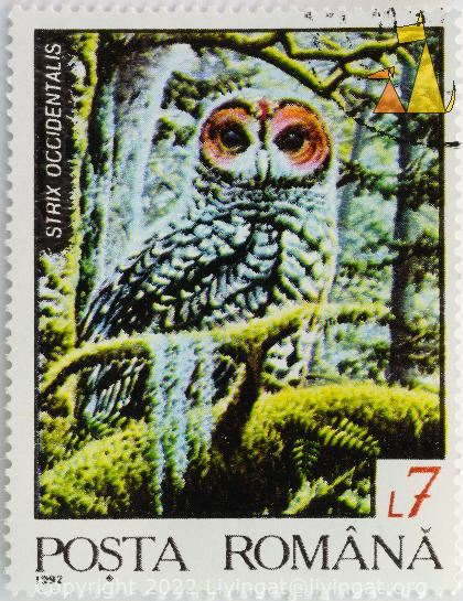 Spotted Owl, Romana, Romania, stamp, bird, posta, 1992, 7 L, Strix occidentalis