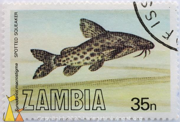 Spotted Squeaker, Zambia, stamp, fish, 35 n, Synodontis macrostigma