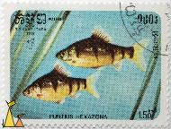 Spotted barb, R.P. Kampuchea, Cambodia, stamp, fish, Postes, 1985, 1.50 Riels, Puntius hexazona