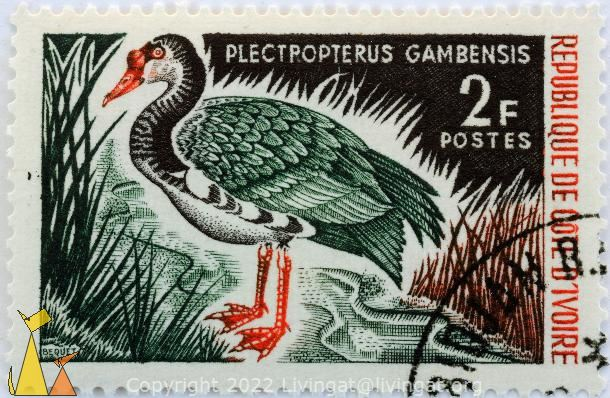 Spur-winged Goose, Republique de Cote D Ivorie, Ivory Coast, stamp, bird, duck, Bequet, 2 F, Postes, Plectropterus gambensis