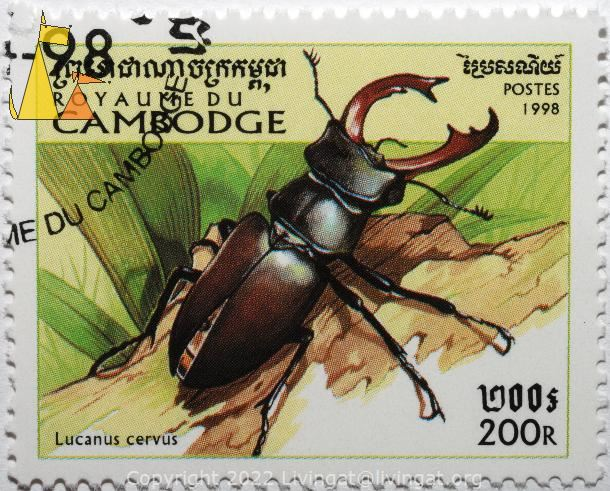 Stag beetle, Royaume du Cambodge, Cambodia, stamp, insect, beetle, Lucanus cervus, 200 R, Postes, 1998
