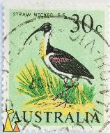 Straw-necked Ibis, Australia, stamp, bird, 30 c, Threskiornis spinicollis