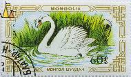 Swimming Mute Swan, Mongolia, stamp, bird, Cygnus olor, water, 60, 1987