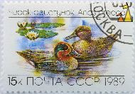 Teal Pair, CCCP, Russia, stamp, bird, duck, Anas crecca, 1989, 15 k