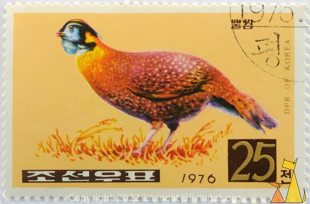 Temmincks Tragopan, DPR of Korea, North Korea, stamp, bird, 1976, 25, Tragopan temminckii