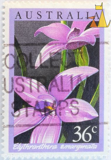 The Notched Elythranthera, Australia, stamp, plant, flower, orchid, Elythranthera emarginata, 36 c