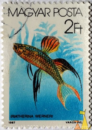 Threadfin rainbowfish, Magyar,Hungary, stamp, fish, Posta, 2 Ft, 1987, Varga Pal, Iriatherina werneri