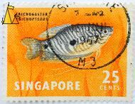 Three Spot Gourami on Orange, Singapore, stamp, fish, orange, 25 cents, Trichopodus trichopterus