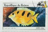 Threeblotched Rabbitfish, Republique de Guinee, Guinea, stamp, fish, opg, 1997, 200 F, Siganus trispilos