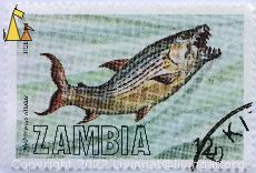 Tiger-Fish, Zambia, stamp, fish, 12 n, Hydrocynus vittatus, teeth