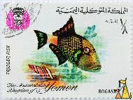 Titan Trigger, The Mutawakalite Kingdom of Yemen, Yemen, stamp, coat of arms, fish, 1/8 Bogashi, Trigger fish, Balistoides viridescens