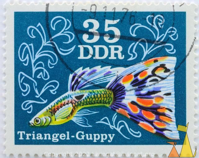 Triangel Guppy, DDR, Germany, stamp, fish, guppy, Poecilia reticulata, Triangel, 35, blue